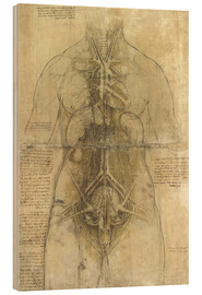Wood  Anatomical study - Leonardo da Vinci