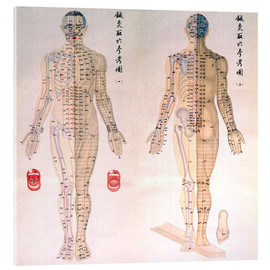 Acrylic glass  Acupuncture Map of the male body