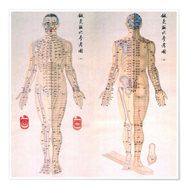 Poster  Acupuncture map of the male body