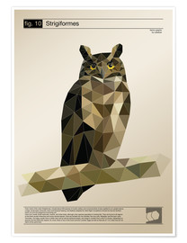 Poster fig10 Polygonowl