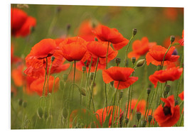 Foam board print  red poppy - Uwe Fuchs