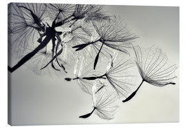 Canvas  Dandelion freedom - Julia Delgado