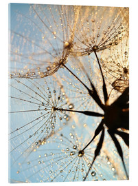 Acrylic print  Look at dandelion from below - Julia Delgado