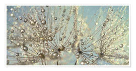 Premium poster Dandelion Magic Raindrop