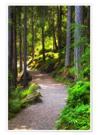 Premium poster Forest path