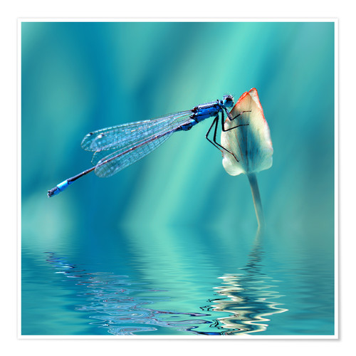 Premium poster Dragonfly with Reflection