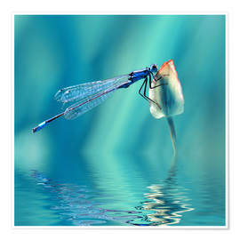 Poster Dragonfly with Reflection