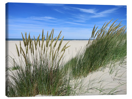 Canvas print  thriving beach grass in the dunes - Susanne Herppich