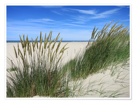 Premium poster thriving beach grass in the dunes