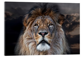 Acrylic print  face to face with a king - Joachim G. Pinkawa