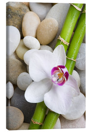 Canvas  Bamboo and orchid - Andrea Haase Foto