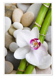 Poster Bamboo and orchid