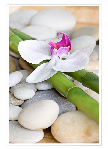 Poster Bamboo and orchid II
