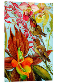Acrylic print  Exotic birds on orchids