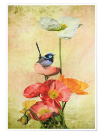 Premium poster Californian Poppies