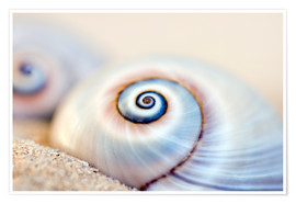 Poster Snail shell II