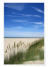 Poster Summer beach grass