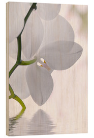 Wood print  Orchid - Atteloi