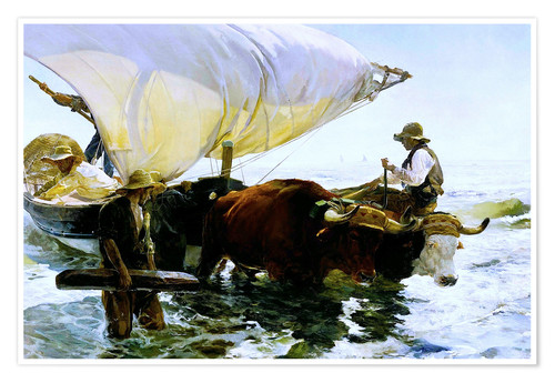 Premium poster Oxen pulling a fishing boat