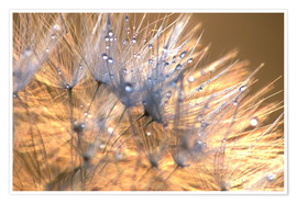 Premium poster  Dandelions Magic Light - Julia Delgado