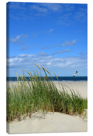 Canvas print  Dune with seagull - Susanne Herppich