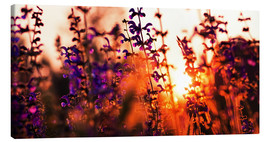 Canvas print  Lavender Sunset - Alexander Voss