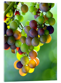 Acrylic print  wine grapes - GUGIGEI
