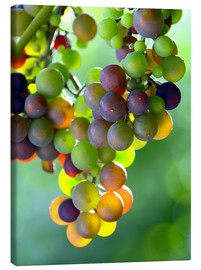 Canvas print  wine grapes - GUGIGEI