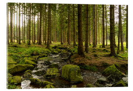Acrylic print  forest with creek - Oliver Henze