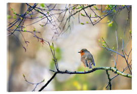 Acrylic print  Robin on a branch - Julia Delgado