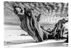 Acrylic print  Old tree root on the beach (monochrome) - Sascha Kilmer