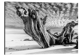 Sascha Kilmer - Old Tree Root on the Beach (monochrome)