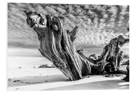 Foam board print  Old tree root on the beach (monochrome) - Sascha Kilmer