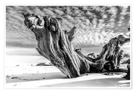 Premium poster Old tree root on the beach (monochrome)
