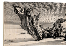 Wood print  Old tree root on the beach (monochrome) - Sascha Kilmer