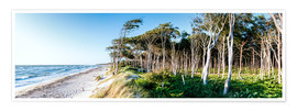 Premium poster Beach and Forest at the Baltic Sea