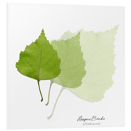 Foam board print  Collage with leaves of the birch - Christian Müringer