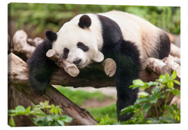 Canvas  Giant panda sleeping - Jan Christopher Becke