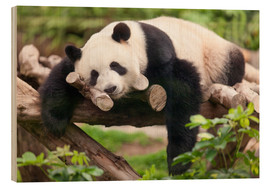 Wood print  Giant panda sleeping - Jan Christopher Becke
