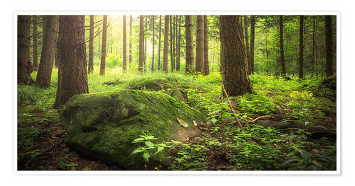 Premium poster Forest and sunshine