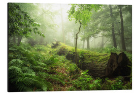 Aluminium print  forest magic - Oliver Henze