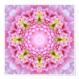 Dolphins DreamDesign - Mandala - Open your heart