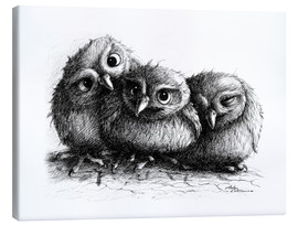Canvas print  Three young owls - owlets - Stefan Kahlhammer