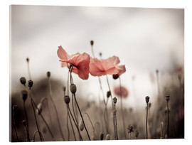 Nailia Schwarz - Poppies 03