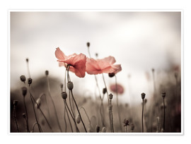 Poster  Poppies 03 - Nailia Schwarz