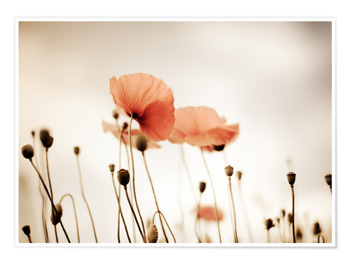 Premium poster Red Poppy Dream