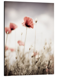 Alu-Dibond  Red Poppy Flowers - Nailia Schwarz