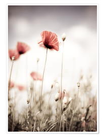 Poster Red Poppy Flowers