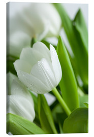 Canvas print  White Tulips 02 - Nailia Schwarz