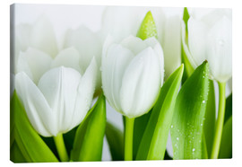 Canvas print  White Tulips 04 - Nailia Schwarz